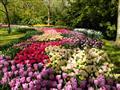 4. Květinový park Keukenhof s návštěvou Amsterdamu