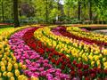 6. Květinový park Keukenhof s návštěvou Amsterdamu