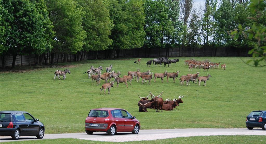 Safari ve Dvoře Králové patří mezi nejlepší v Evropě