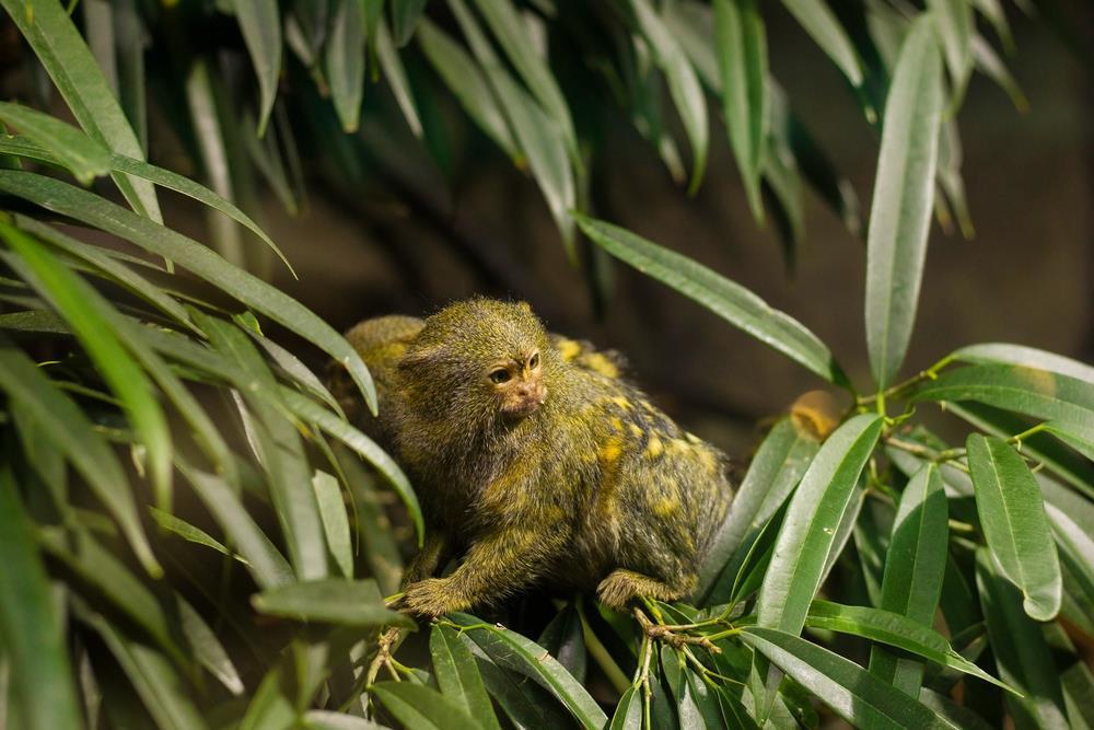 Součástí Tropicaria je i výjimečná a atraktivní tropická zoologická zahrada
