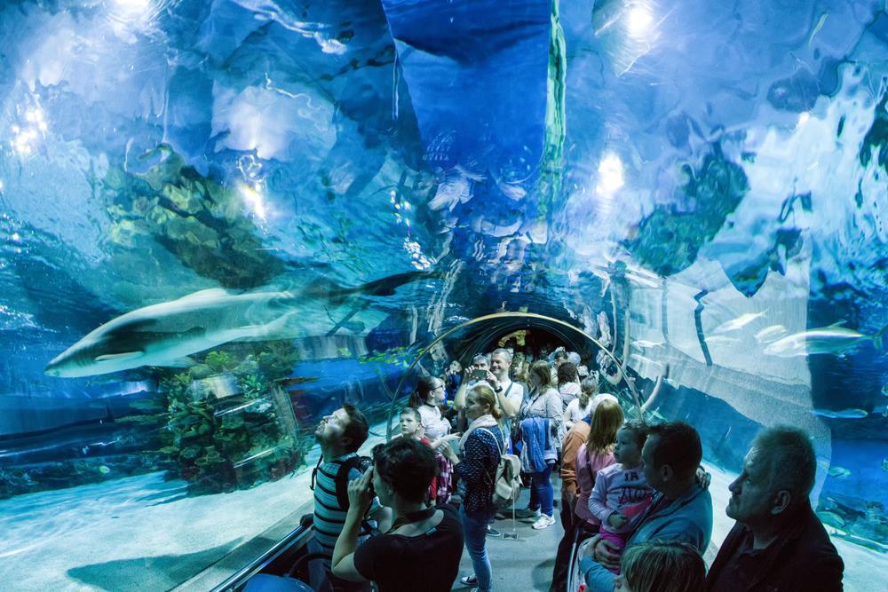 Projděte se tunelem, ve kterém vám budou nad hlavou plavat žraloci a hejna ryb