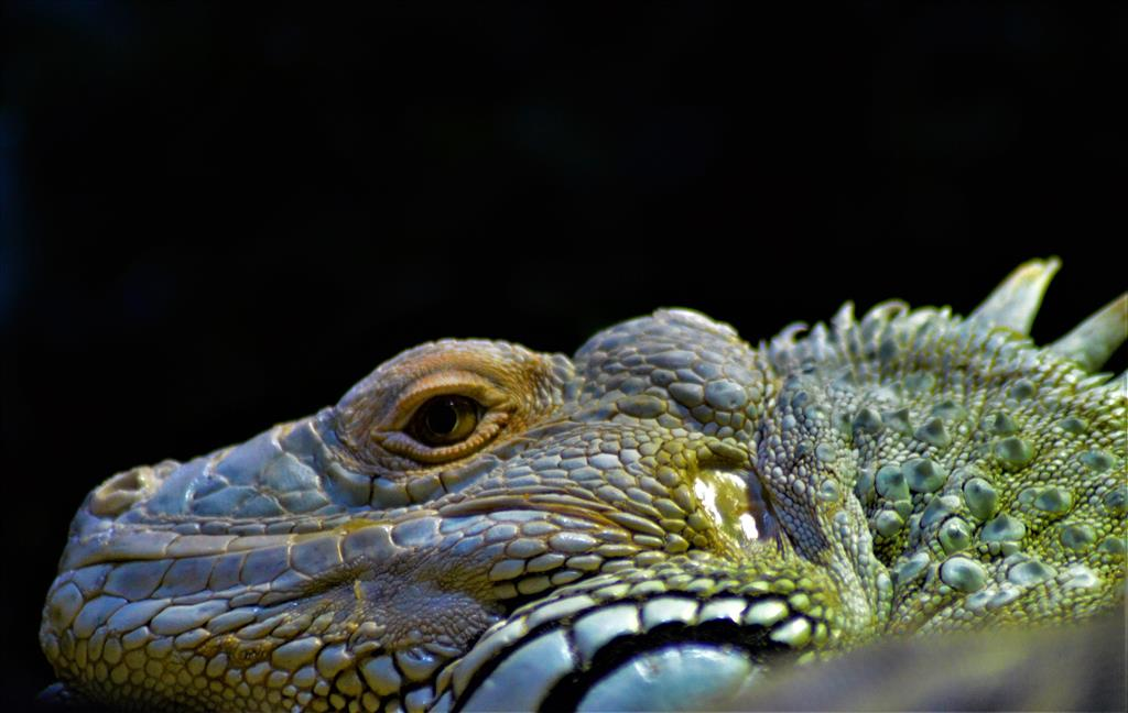 Kromě ryb uvidíte i exotické ptáky, Tamařiny, aligátory, želvy, opice a plazy