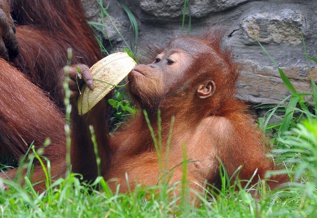 ZOO Budapešť patří k nejstarším zoologickým zahradám na světě.