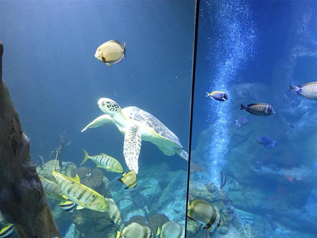 K vidění jsou sladkovodní a mořské ryby, ryby obývající Středozemní moře, Atlantik i tuzemské vody