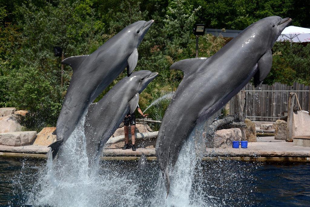 Hlavní atrakcí je delfinárium a delfíní laguna – systém šesti velkých jezer a bazénů. Pro návštěvníky je připraveno představení několikrát denně