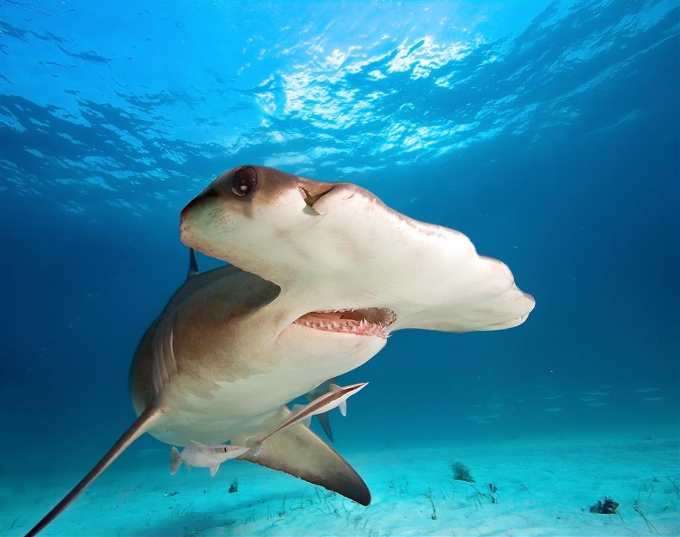 Dům moří se chlubí několika druhy žraloků