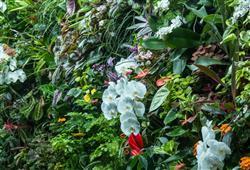 Na výstavě lze zakoupit i exotické druhy květin