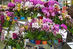 Můžete zde nakoupit nejen orchideje, ale vše co souvisí se zahradou