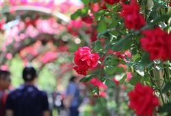 Během slavnosti uvidíte tisíce květů