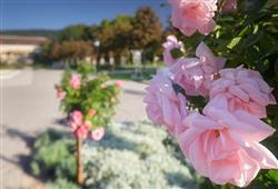 K vidění je až 600 druhů růží