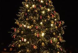 Podobně jako ve všech adventních městech, i zde je dominantou trhů krásně nazdobený strom