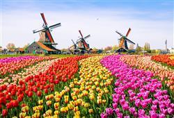 Den v záplavě pestrobarevných tulipánů a větrných mlýnů - Holandsko jako vyšité.