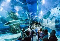 Hned po ránu se vydáme do Tropicaria, největšího akvária ve střední Evropě