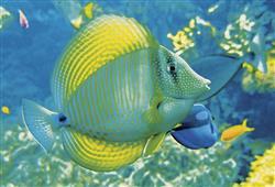 Špatného počasí se nemusíte bát, v zoo je spousta pavilonů, například pavilon akvárií a terárií se třpytivými rybkami a vzácnými plazy