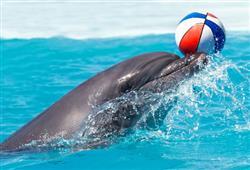 Během delfíní show se baví nejen návštěvníci, ale i samotní delfíni