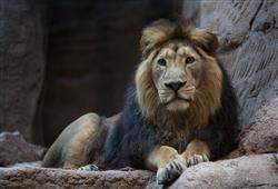 Zoo se nachází v lesoparku, takže většinu prohlídky absolvujete mezi stromy