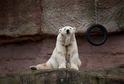 Norimberská zoo otevřela své brány v roce 1912 a dnes je domovem pro více než 3 000 zvířat