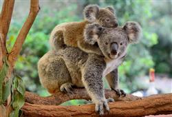V současné době je zde k vidění asi 700 druhů zvířat, včetně přísně chráněných druhů