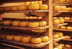 Ve městě narazíte na řadu obchodů nabízejících sýry vč. ochutnávky. Holandské sýry jsou pojmenovány podle místa původu