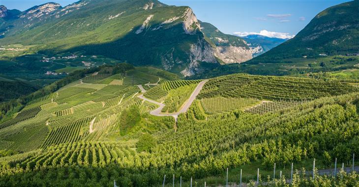 Oblast Trenta je vyhlášena svými malebnými vinohrady. Produkují se zde vína hlavně bílá