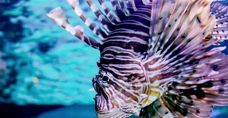Naleznete zde akvária a sály s maďarskou faunou, mississippskými aligátory, varany, pavouky, žábami i sladkovodními rybami