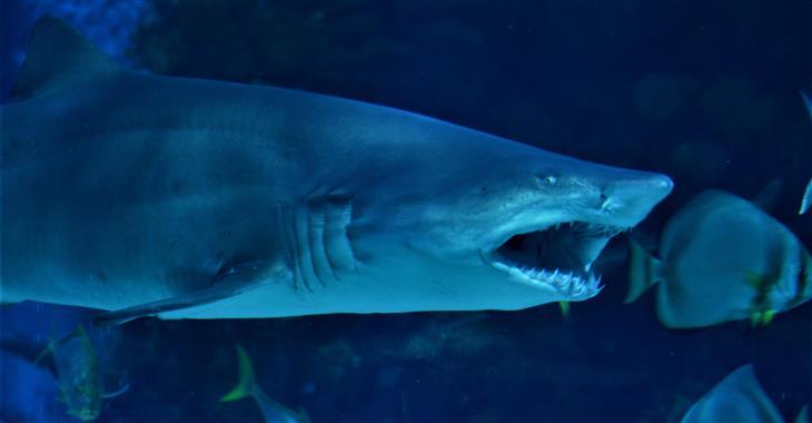 V akváriích jsou zastoupeny všechny kontinenty vč. ryb z korálových útesů, murén a rejnoků