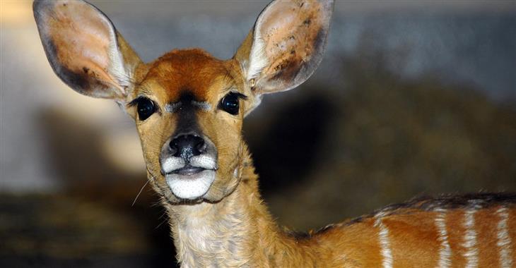 Zvířátka i rostliny z celé planety – to je výlet do Tropicaria a ZOO Budapešť