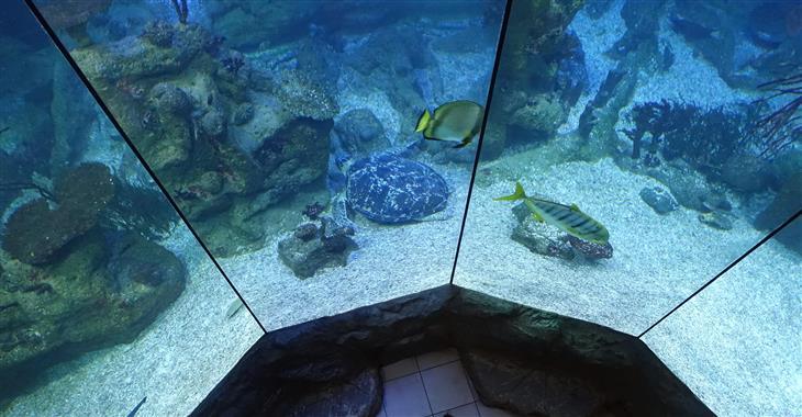 Obří nádrže s exotickými živočichy jsou umístěny v bývalé protiletadlové věži vybudované za 2. světové války