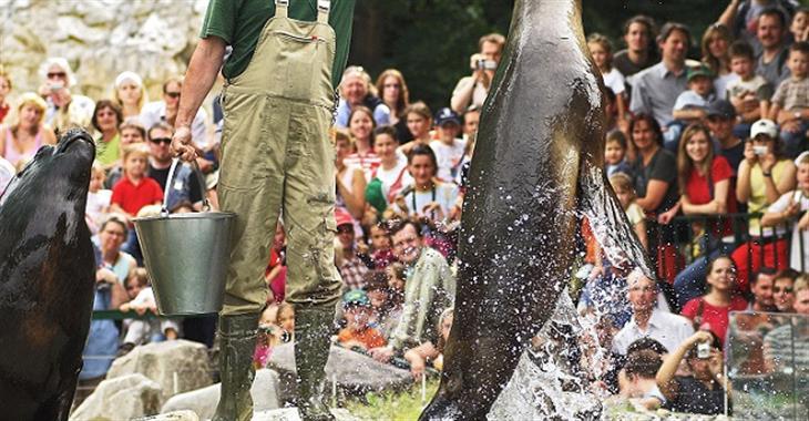 Během dne probíhají v zoo různé programy, včetně ukázek krmení nejrůznějších zvířat