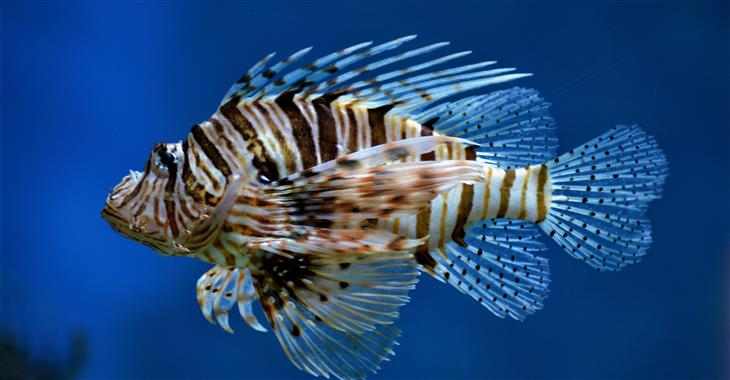 V celém areálu najdete obrovské mořské akvárium a asi 50 jiných akvárií