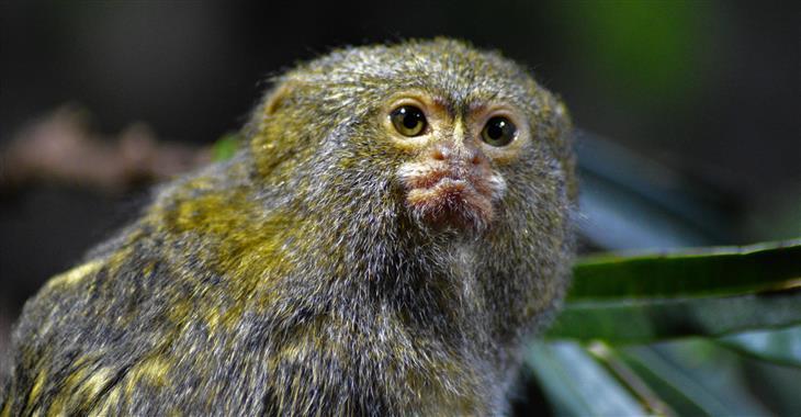 K vidění je asi 400 druhů zvířat a 100 druhů rostlin nejen z Rudého moře, ale i Karibiku a Indického oceánu
