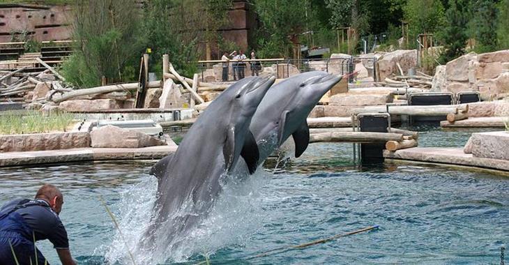 Tato inteligentní zvířata dokážou vykouzlit úsměv na rtech celé rodině, včetně věčných morousů