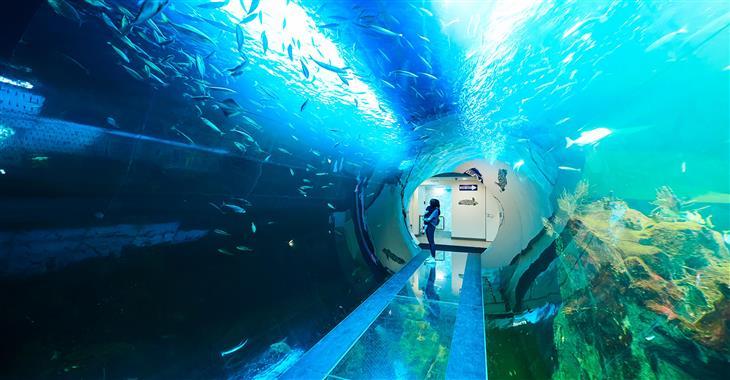 V Domě moří se můžete projít desetimetrovým Atlantickým tunelem, kde uvidíte vše včetně žraloka vousatého