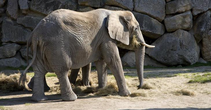 V roce 1906 se zde poprvé na světě narodil slon africký chovaný v zajetí